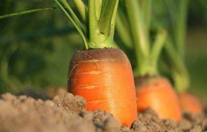 Savjeti za uzgoj povrća prema narodnoj predaji. Zašto ne?!